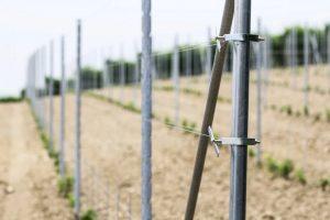 Metodo Grimaldi per le vigne: particolare del palo