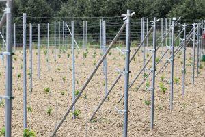 Metodo Grimaldi per le vigne